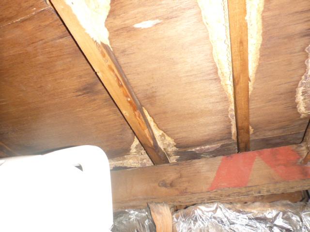 雨漏り修理お客様の声 葛飾区柴又 対応が早く接客が丁寧だった